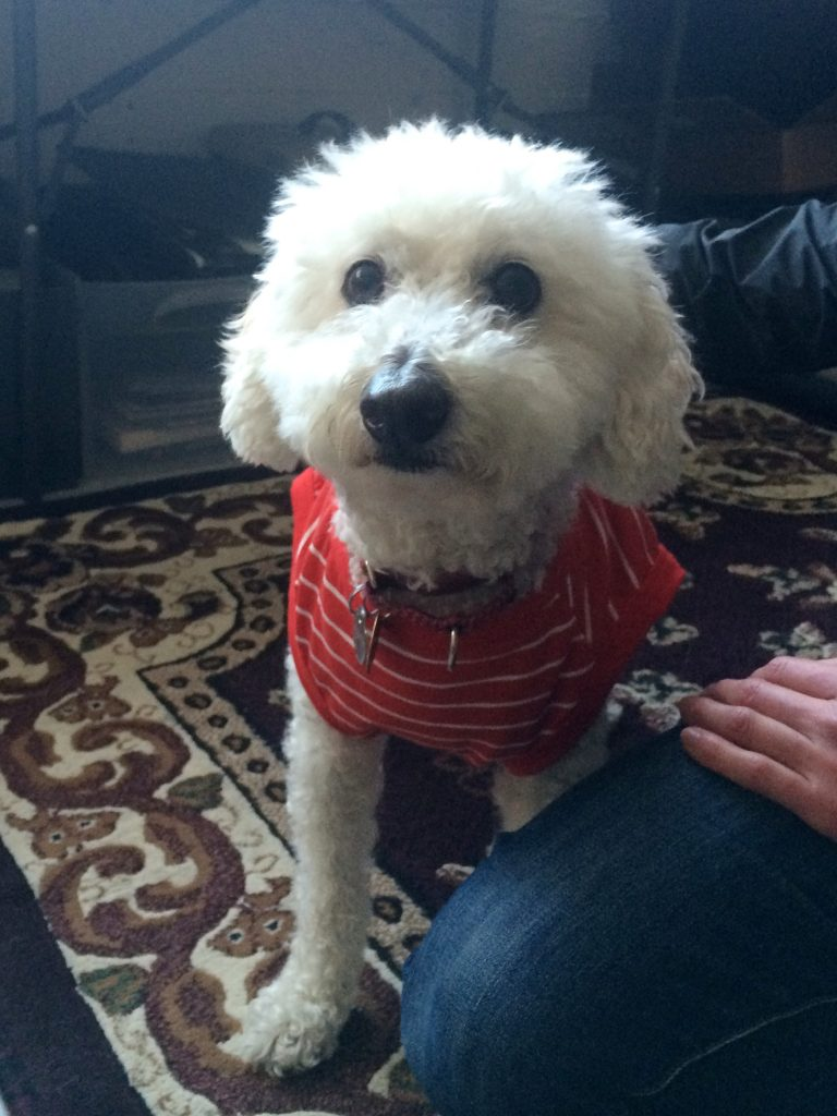 Wally Rescue Dog in a red Christmas Onesie Los Angeles | www.littlechefbigappetite.com