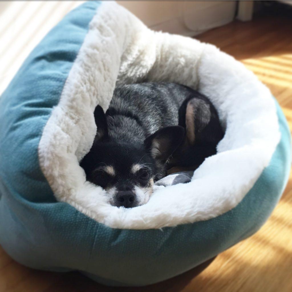 Best Friends by Sheri Deep Dish Cuddler Bed | www.littlechefbigappetite.com