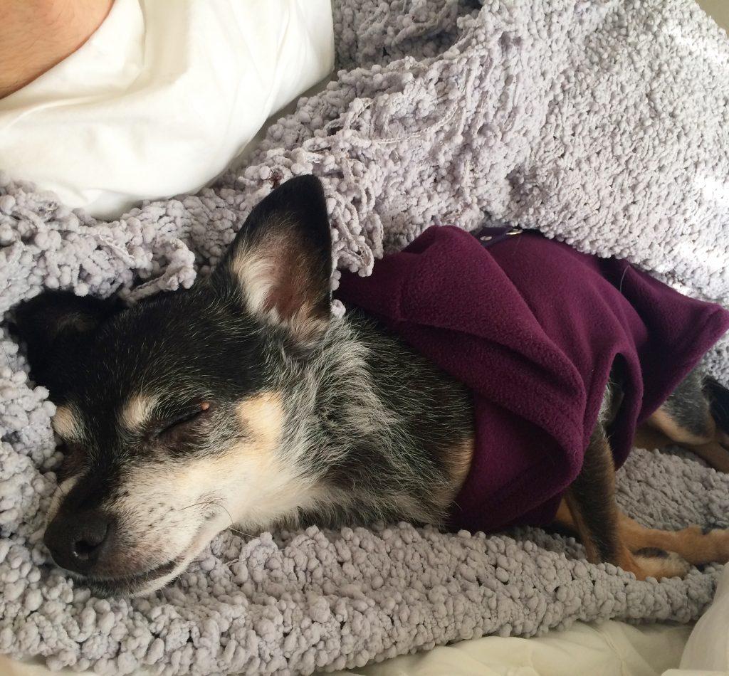 Bessie Sleeping