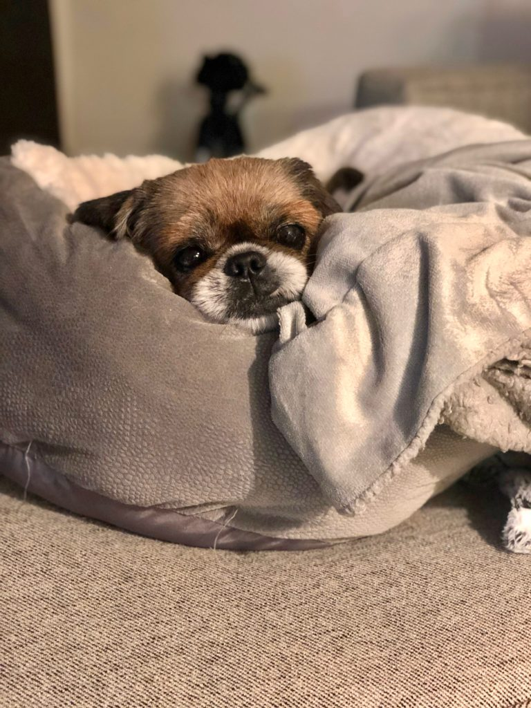Romeo Rescue Dog | www.littlechefbigappetite.com