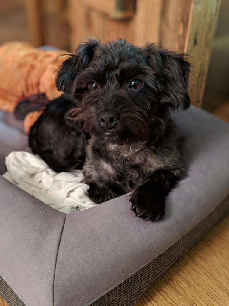 Ralphie Foster Dog   littlechefbigappetite.com